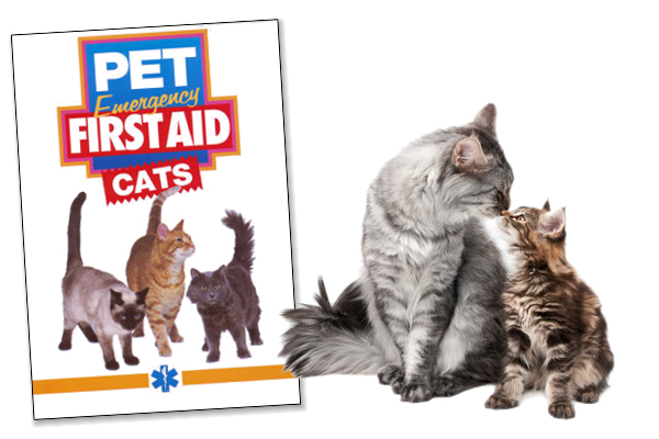 First Aid Video for Cats